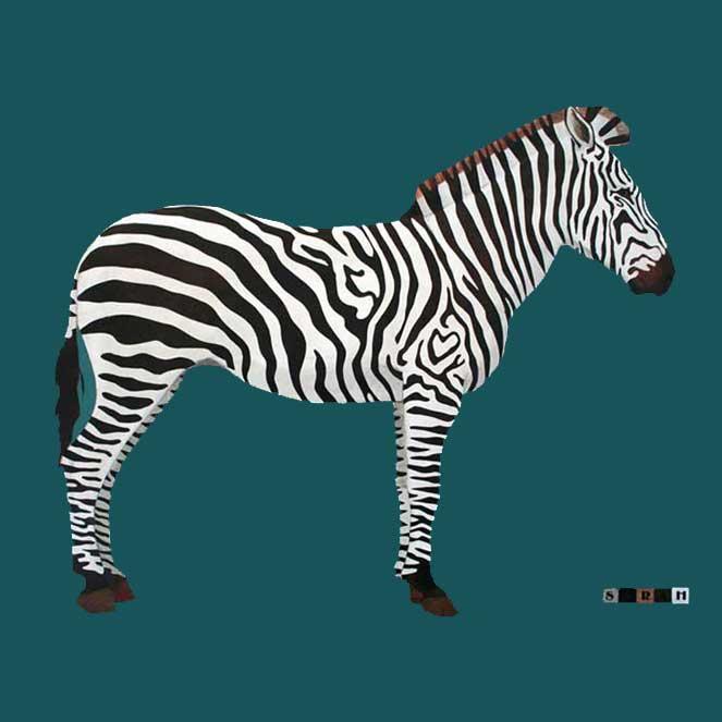 Sarah's Zebra